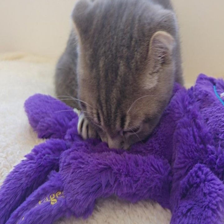 a grey kitten snuggling a purple pillow while sleeping