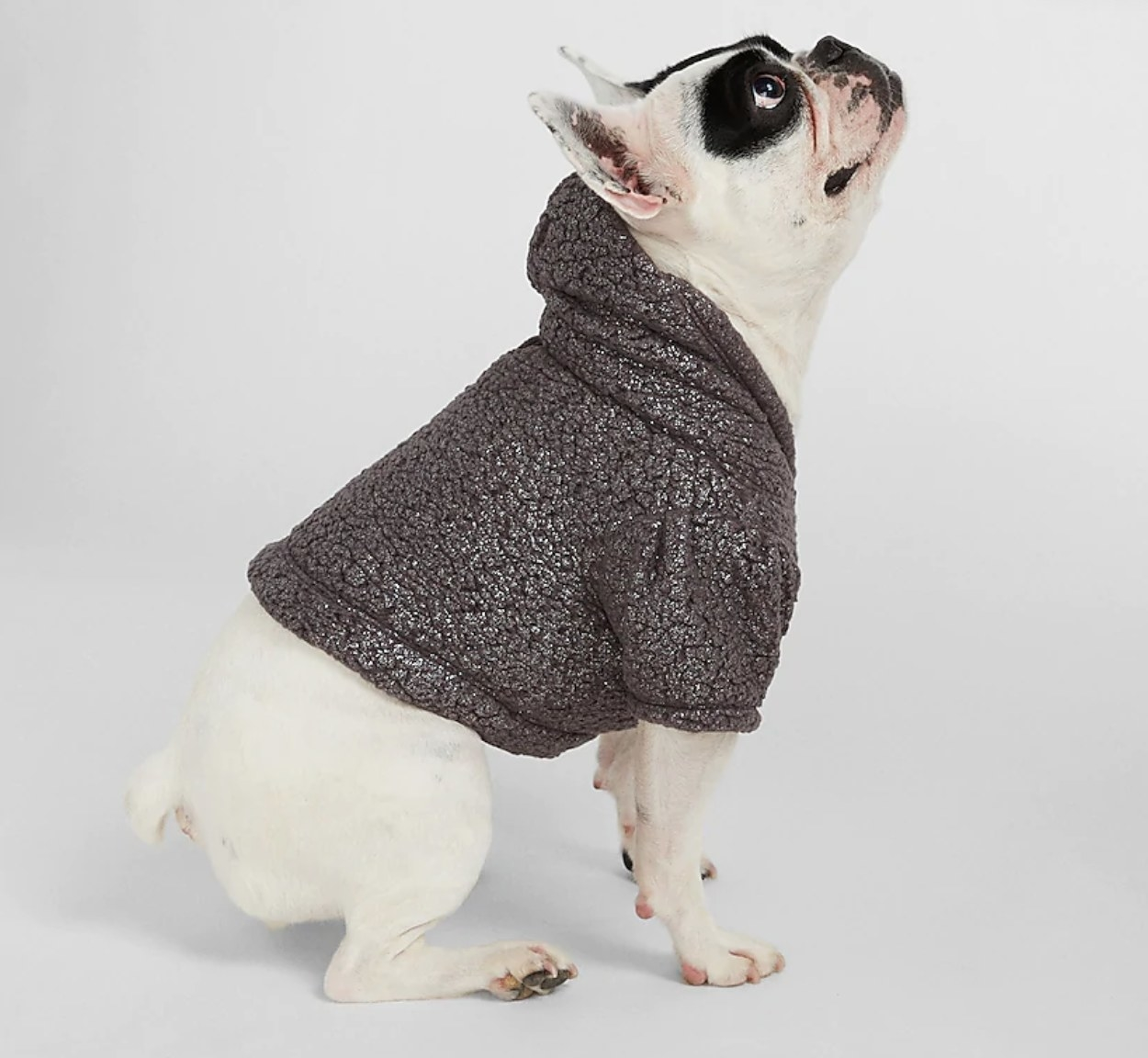 A dark brown pullover that a bulldog is wearing