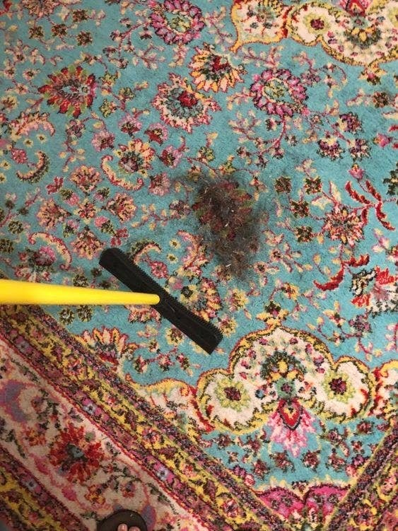 Reviewer sweeping up large pile of hair from rug