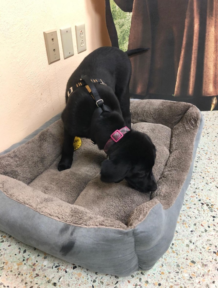 The washable dog bed with the reviewer's dog