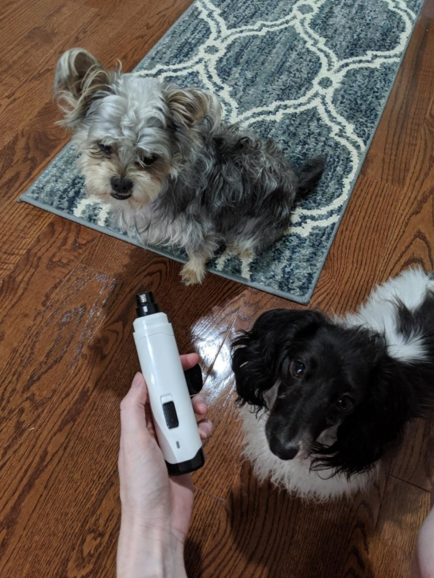 Reviewer holding nail clipper in front of two dogs