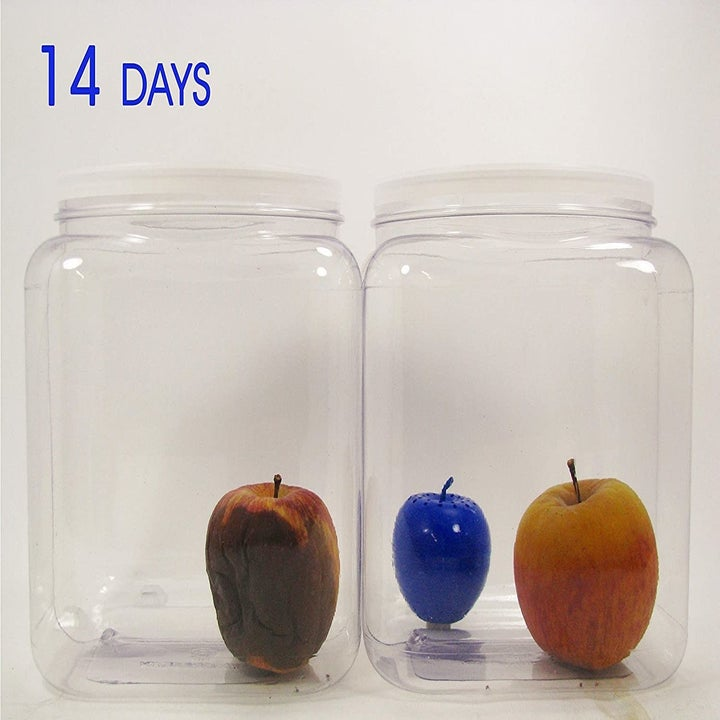 A container on the left with a rotten apple inside and another container filled with a Blueapple freshness ball  and a fresh-looking apple