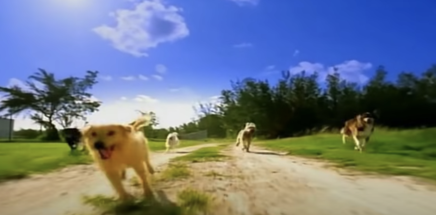 Dogs running from Who Let The Dogs Out video