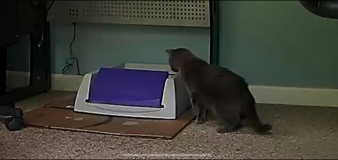 The self-cleaning litter box in white and purple