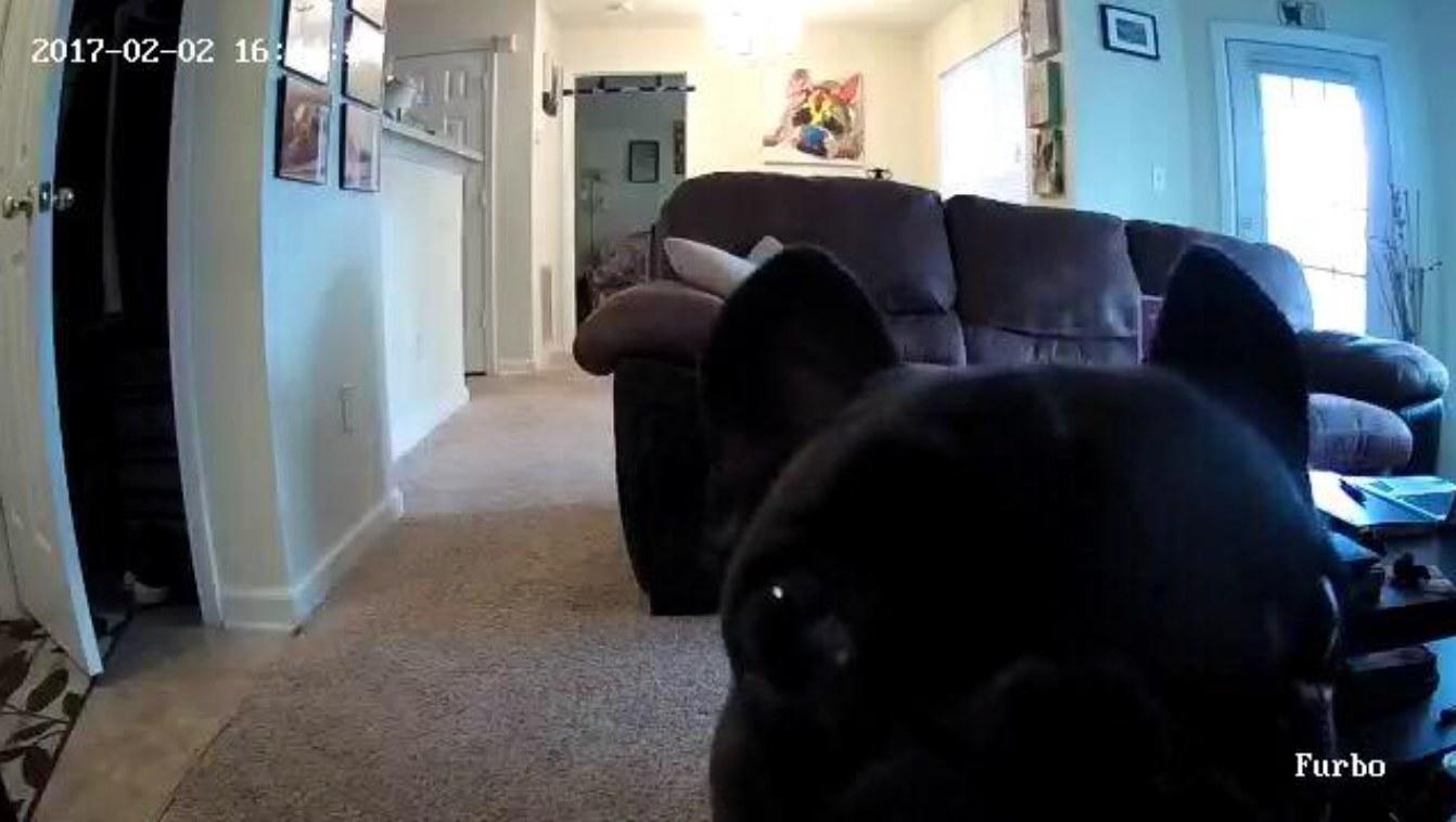 The wifi pet camera in white