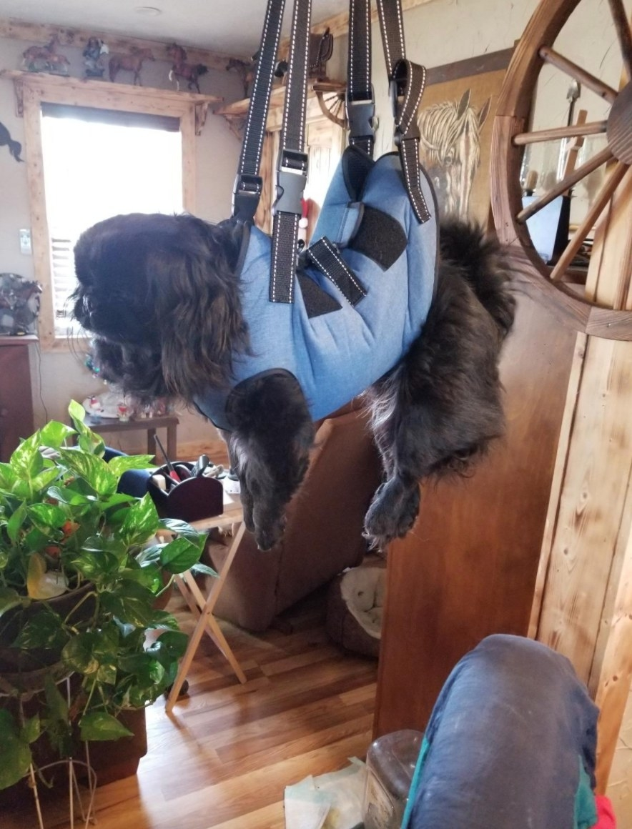 The dog lift harness in blue