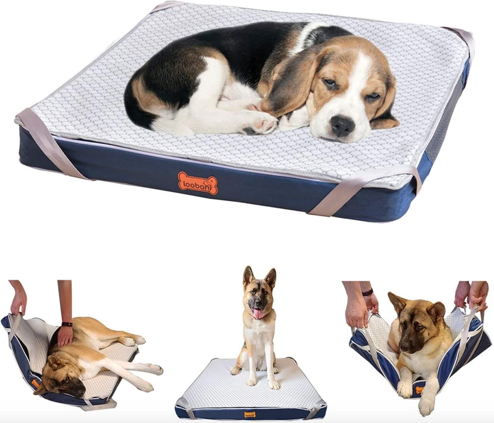 The orthopedic dog bed