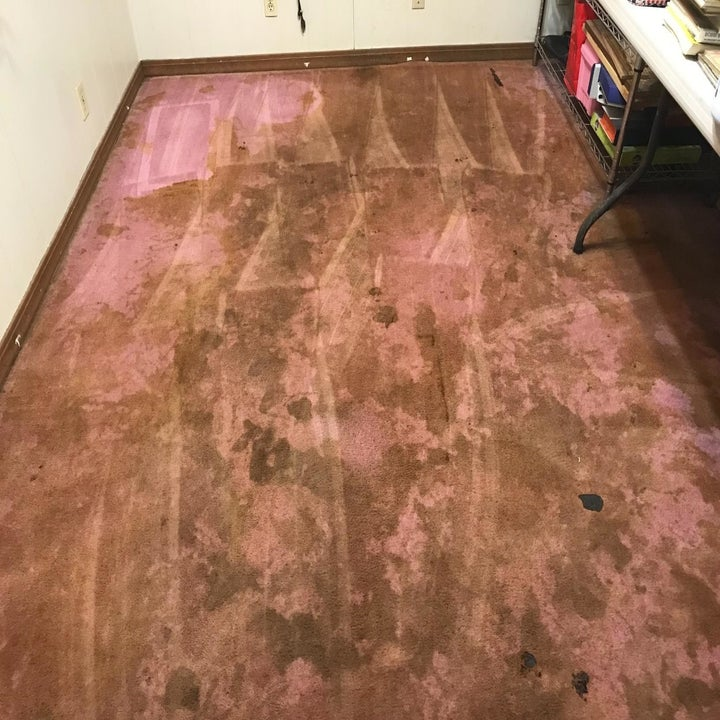 Before photo of a pink carpet that's heavily stained with large brown blotches that cover most of the room