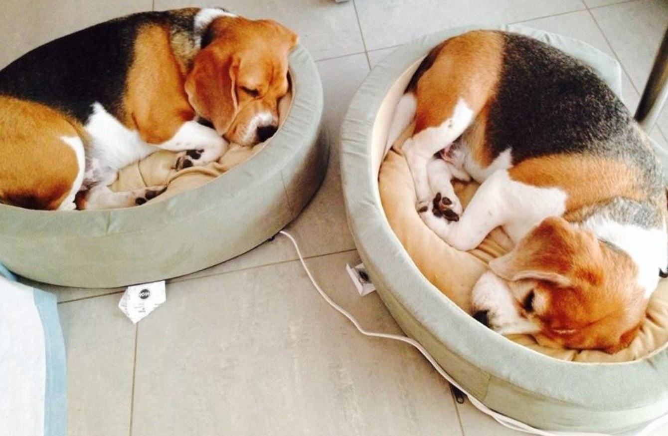 The heated pet bed