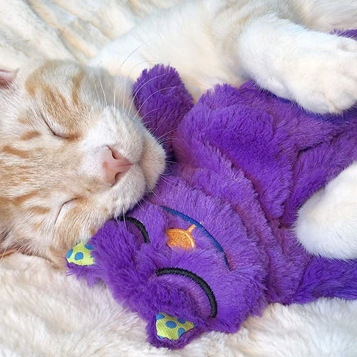 Cat cuddling with the toy