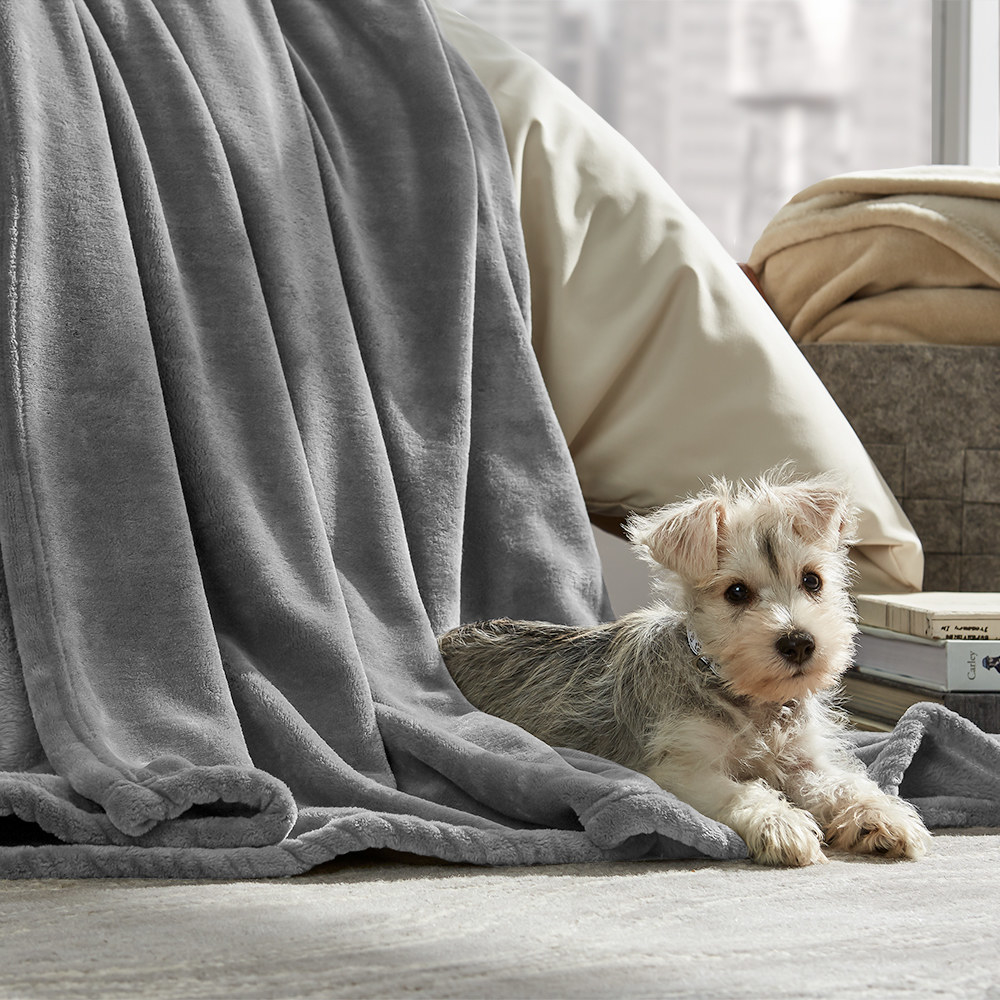 dog laying on top of the blanket in gray