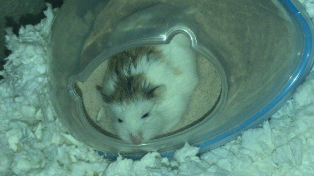Review photo of the hamster potty