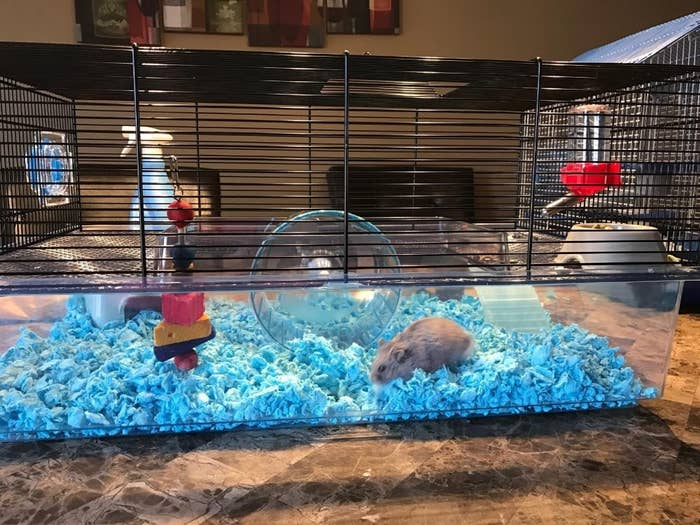 Review photo of the hamster cage