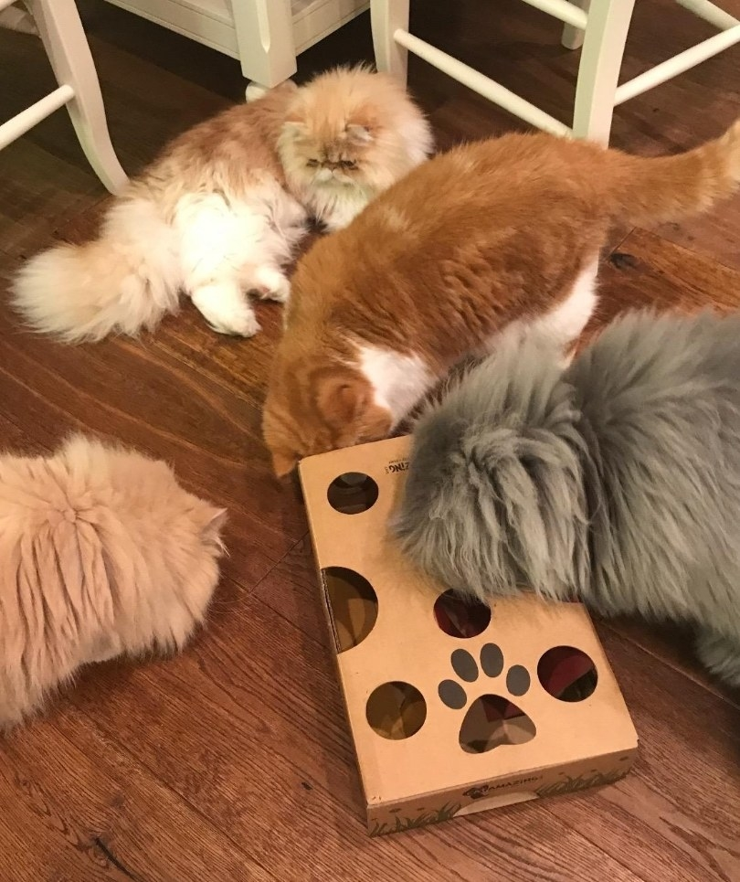 four cats crowded around a cardboard interactive cat toy