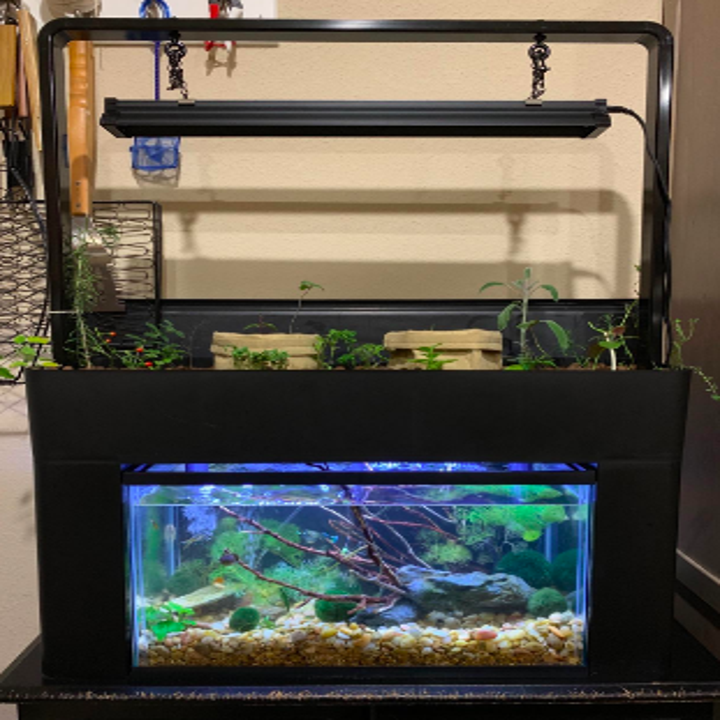 Reviewer's fish tank with real plants inside water and herbs growing on top