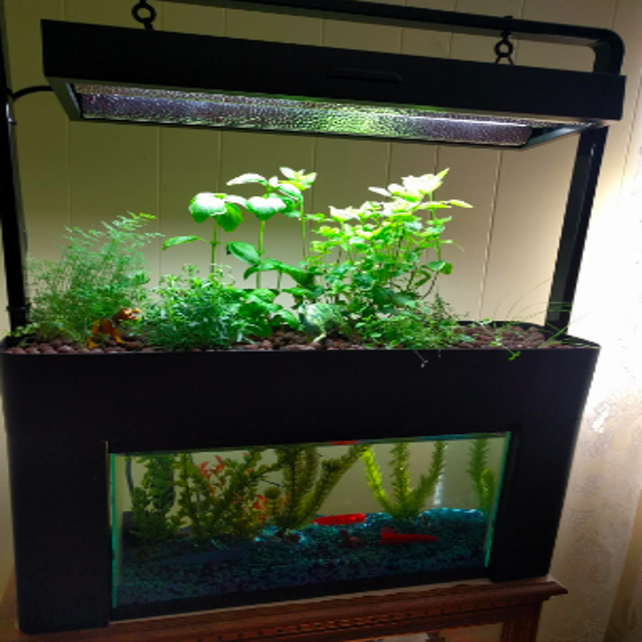 Different reviewer with large set of herbs growing inside fish tank, below sun lamp provided