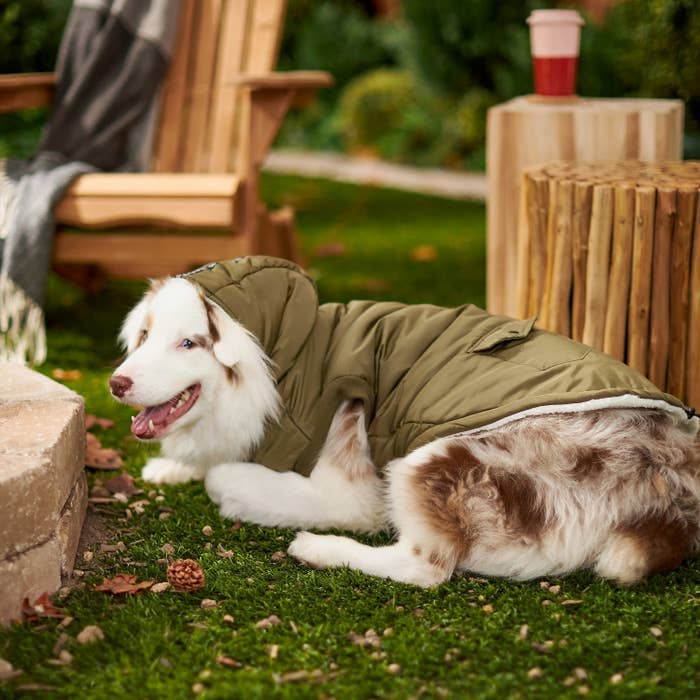 a dog wearing the insulated coat while laying on the grass outdoors