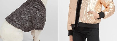 on left Frenchie wearing a hoodie and on right model wearing a metallic jacket
