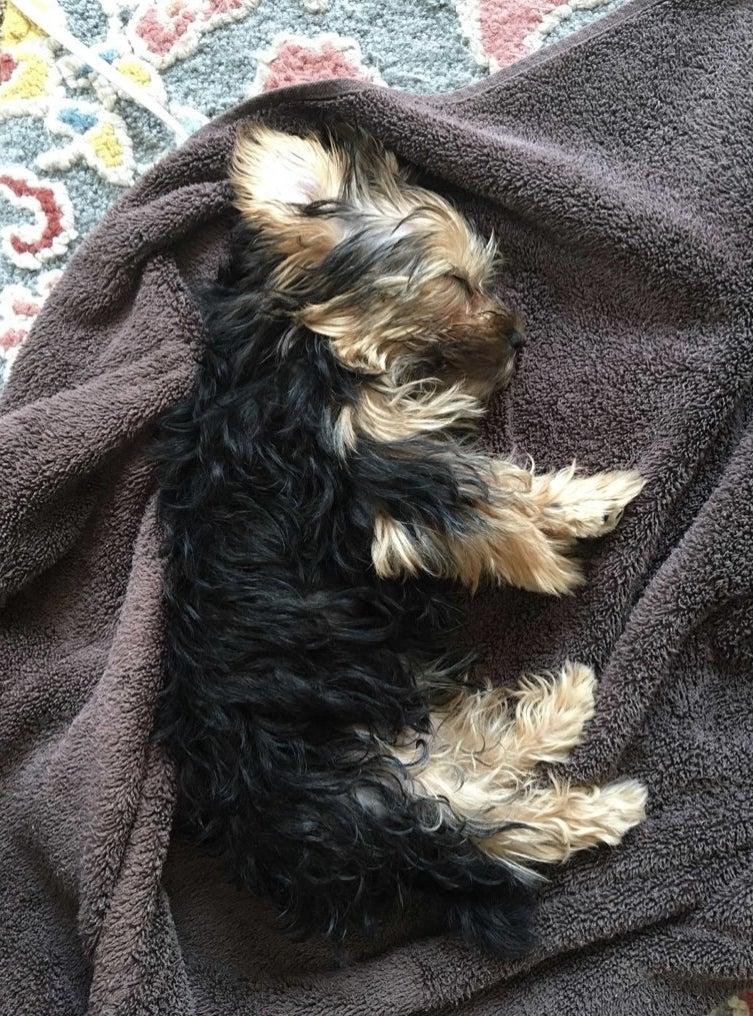 Dog laying on heating pad.
