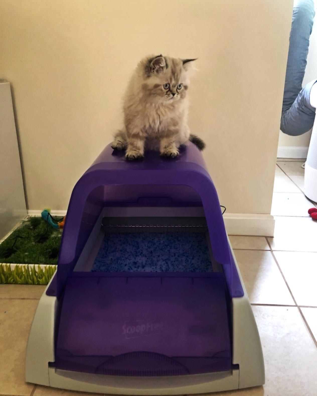 reviewer photo showing their cat sitting atop the self-cleaning litter box