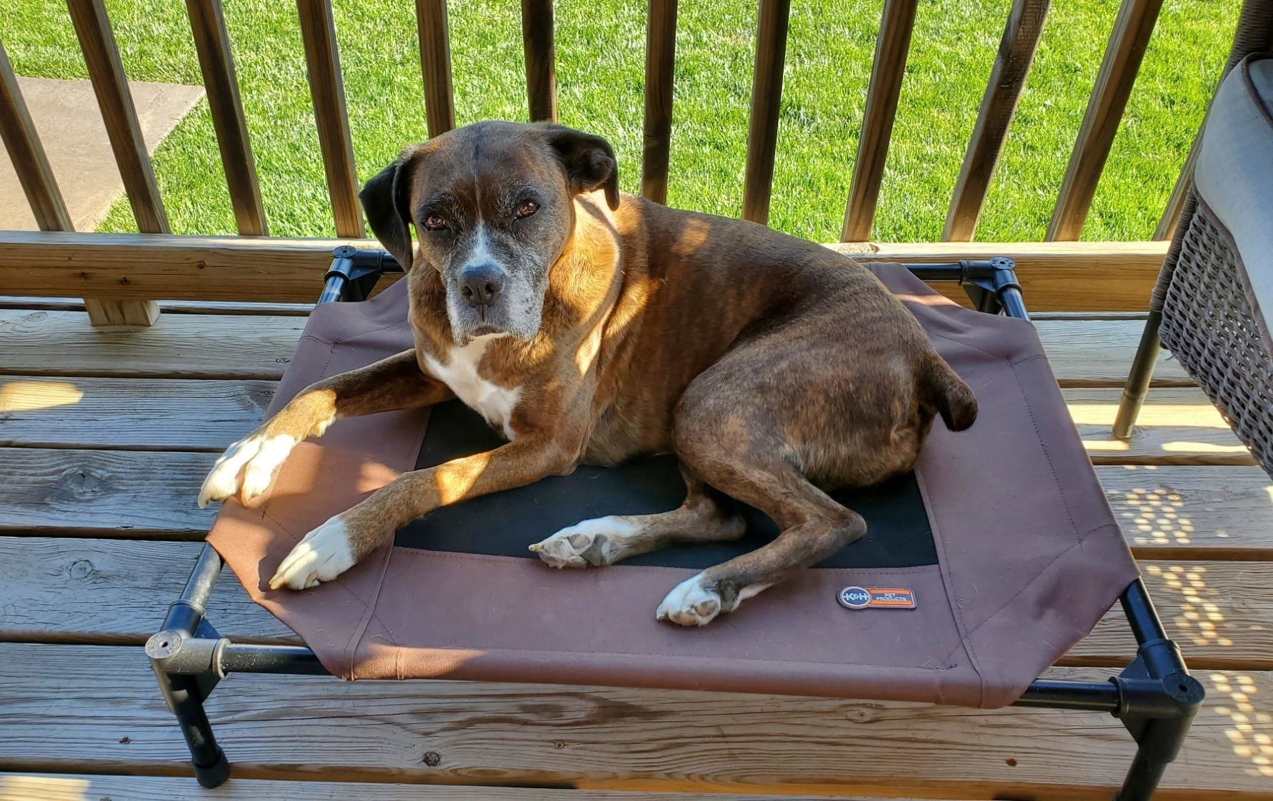 cute dog laying on elevated go bed