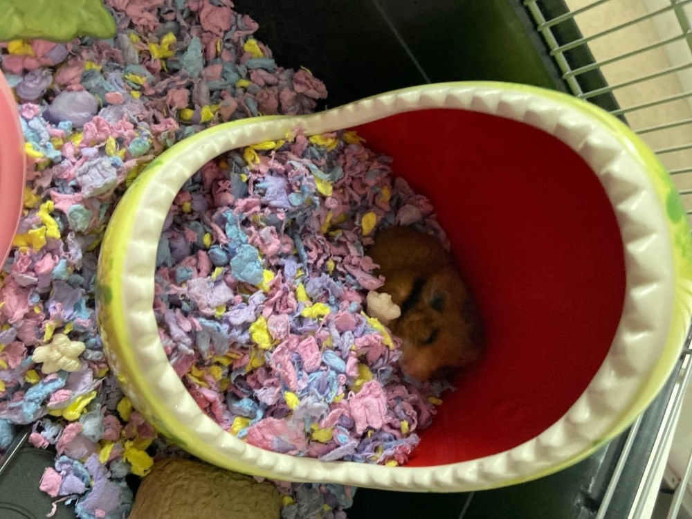 Review photo of the hamster hideout
