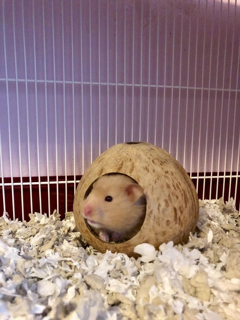 Review photo of the coconut hamster hut