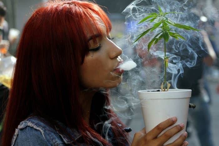 An image of a woman blowing smoke on a cannabis plant