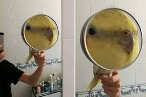 A bird in a magnifying glass