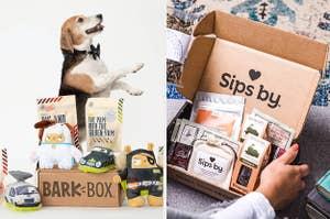 A dog, the kit, a tea kit