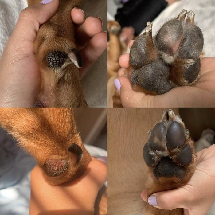 A before and after picture of dog paws