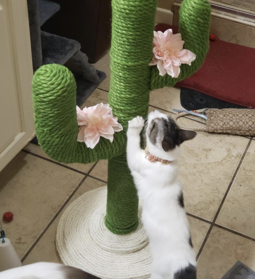 A cat is scratching a cat scratching post shaped like a cactus