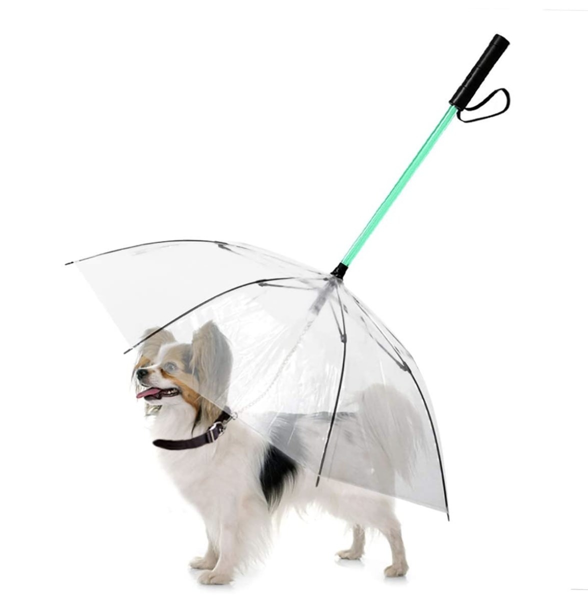 A dog with an umbrella over them