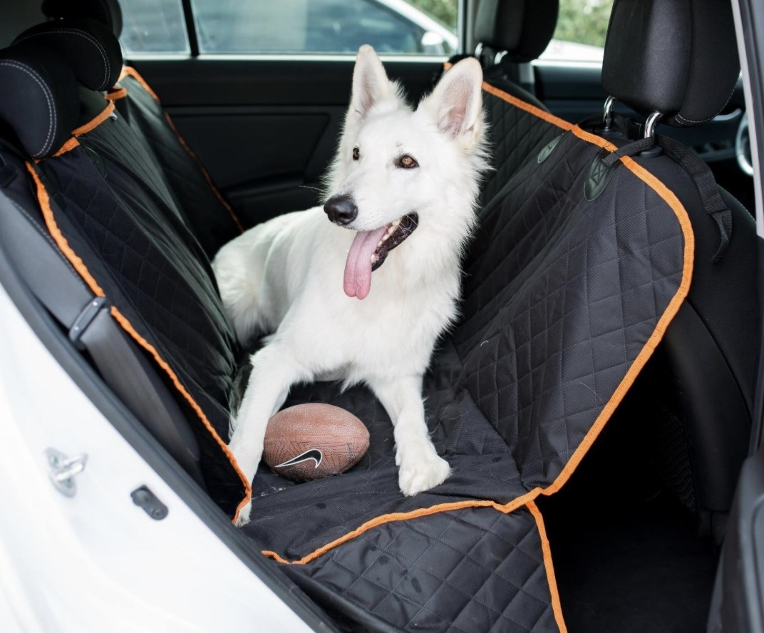 A dog in a back seat with a seat cover on
