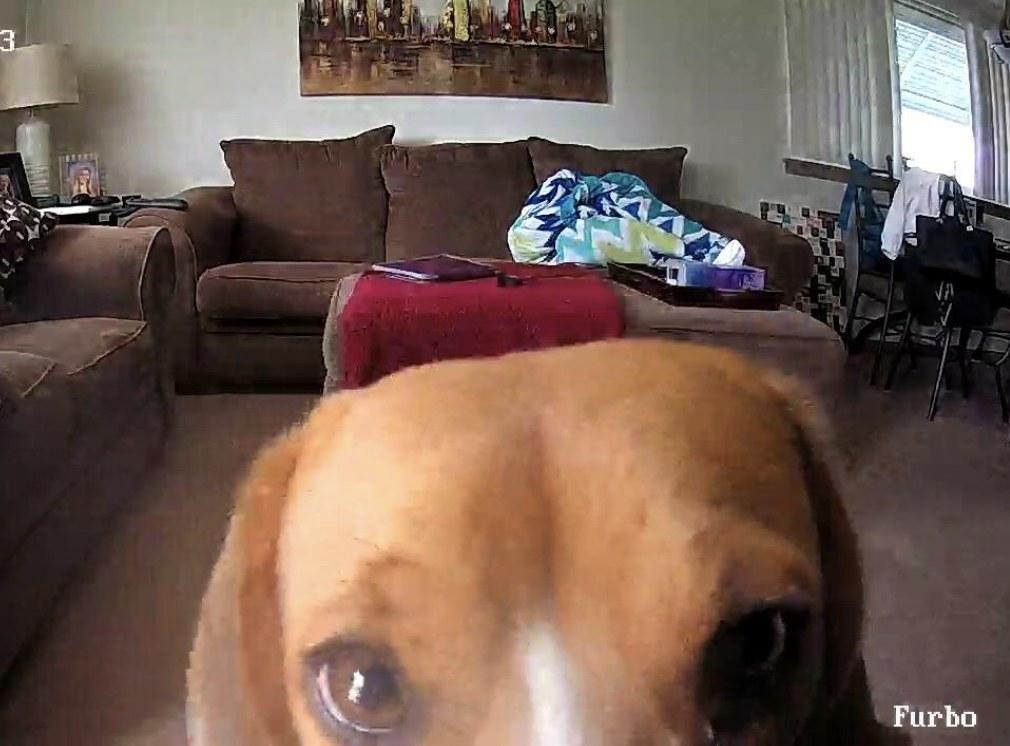 A dog is staring at a camera