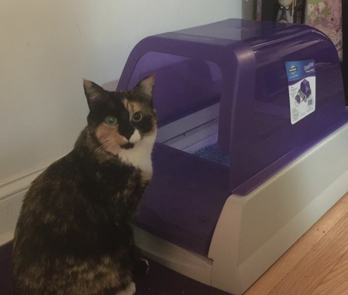 A cat in front of a litter box