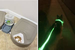 A split thumbnail of a food bowl and a dog with a green LED leash