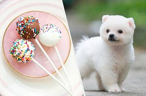 On the left, three cake pops with sprinkles on a plate, and on the right, a fluffy Pomeranian puppy