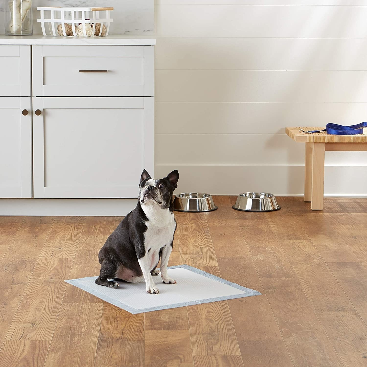 dog sitting on a puppy pad in a kitchen