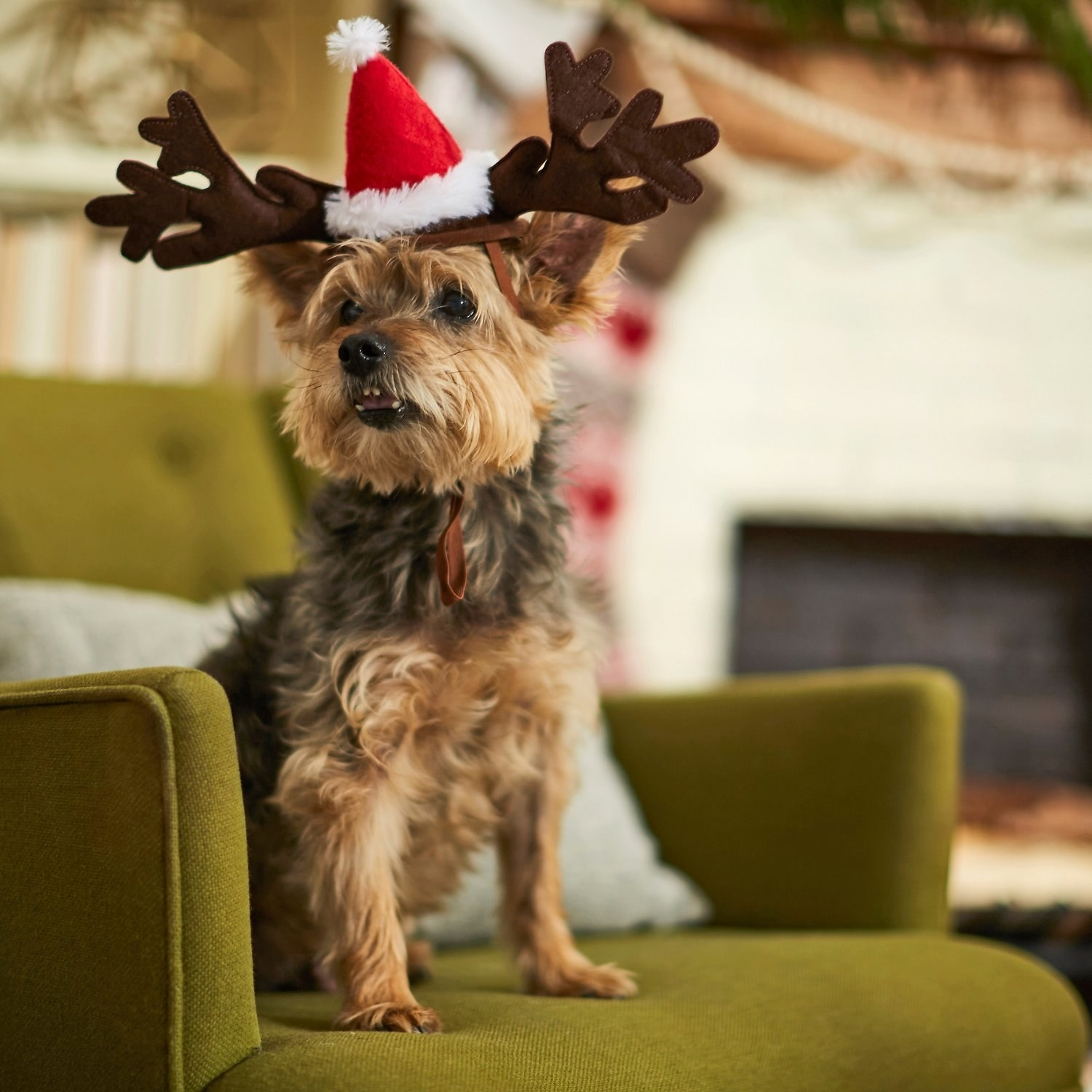 a yorkshire terrier wearing the reindeer antler cat and dog headpiece