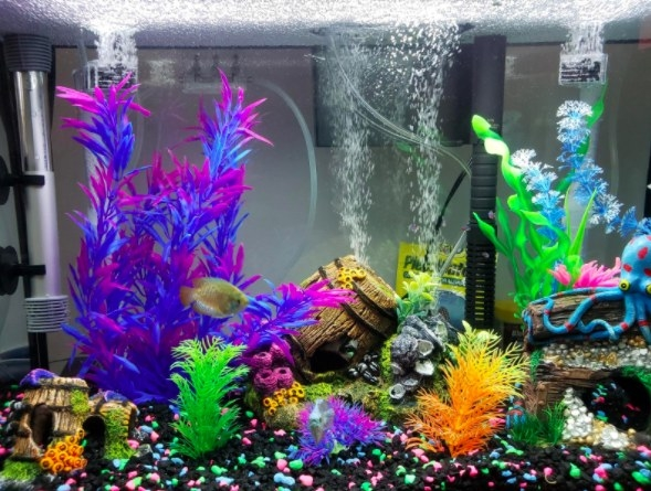 aquarium full of brightly colored plastic plants