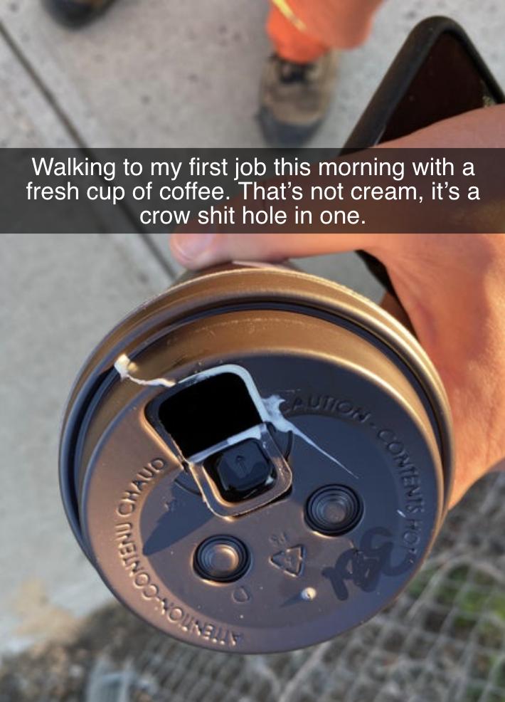 bird shit inside a coffee cup