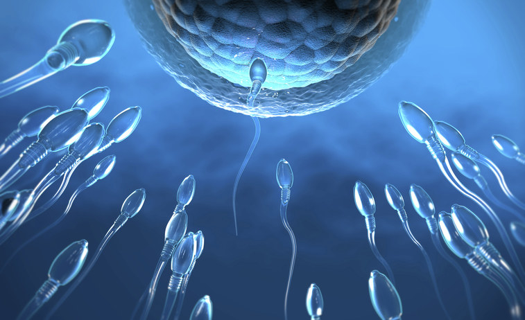 Image of sperm and egg.