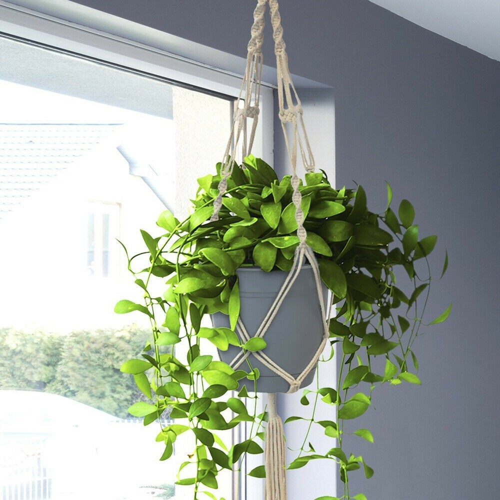 The planter hanging from a ceiling with potted plant inside