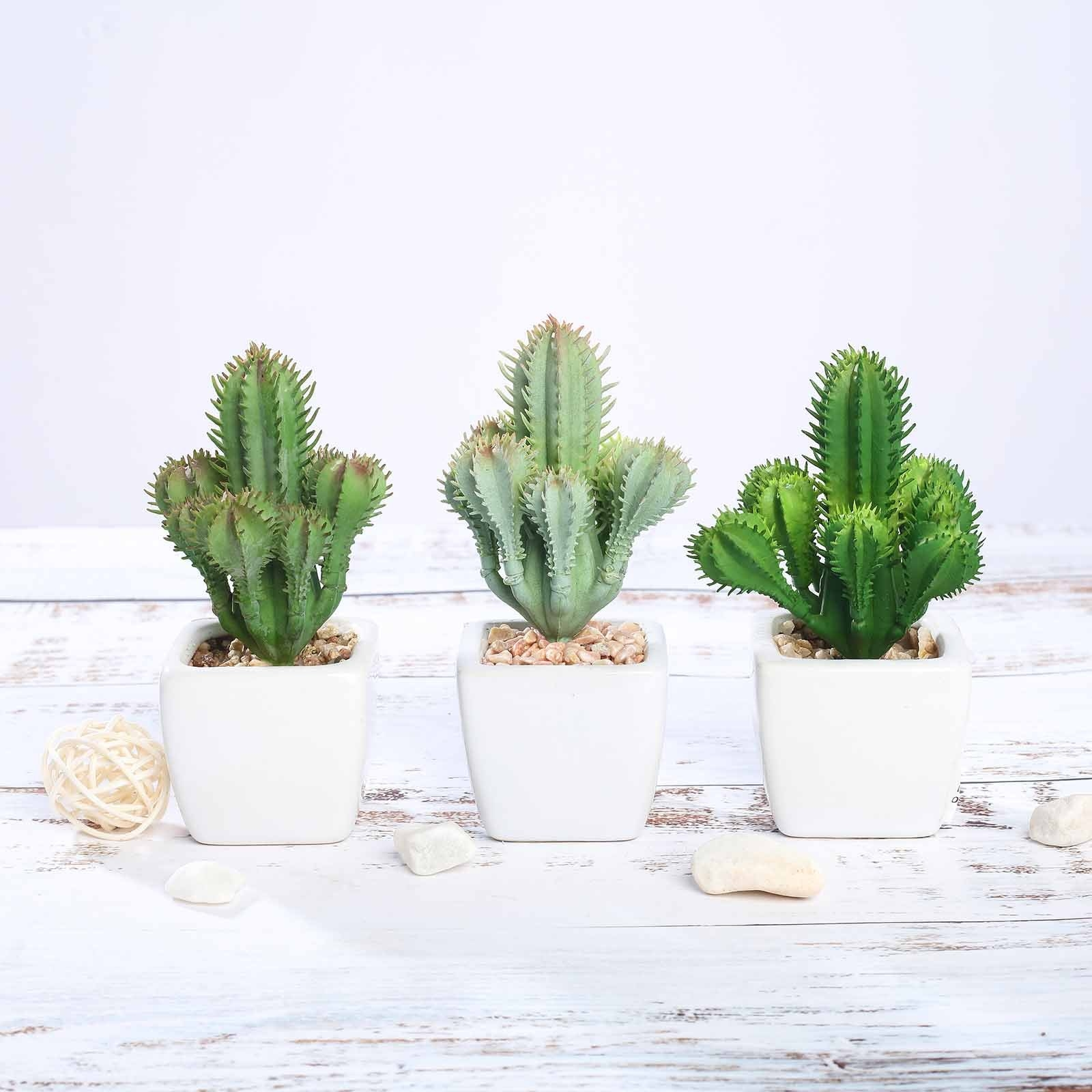 Three of the cacti lined up on a white table