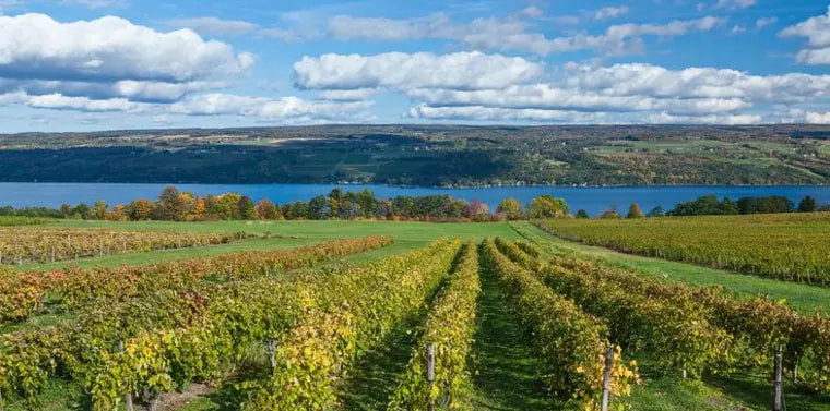 a winery in the Finger Lakes