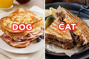 "On the left, a grilled turkey sandwich with Swiss cheese labeled ""dog,"" and on the right, a steak and cheddar panini labeled ""cat"""