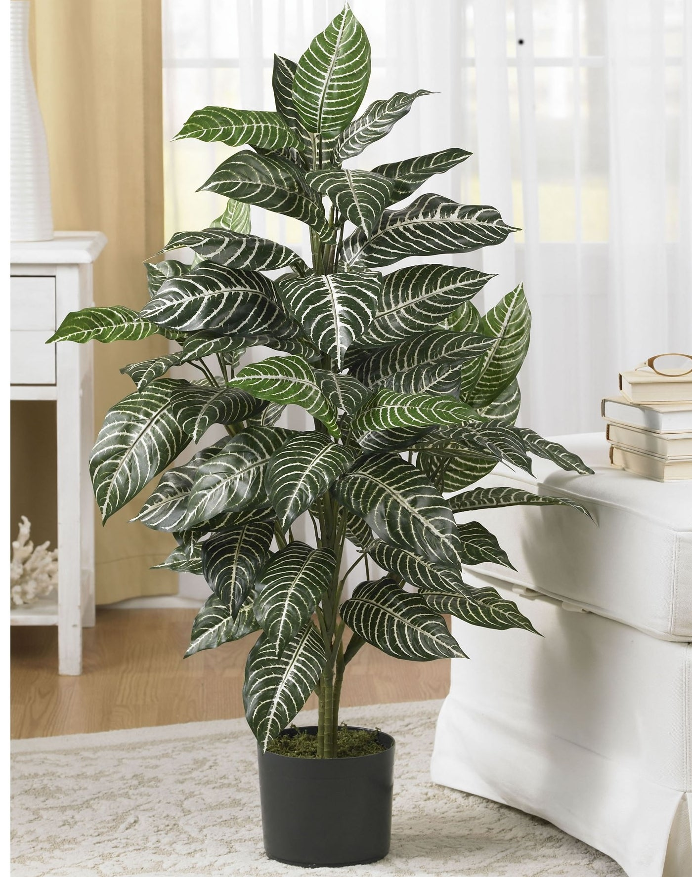 The zebra plant placed in a white living room