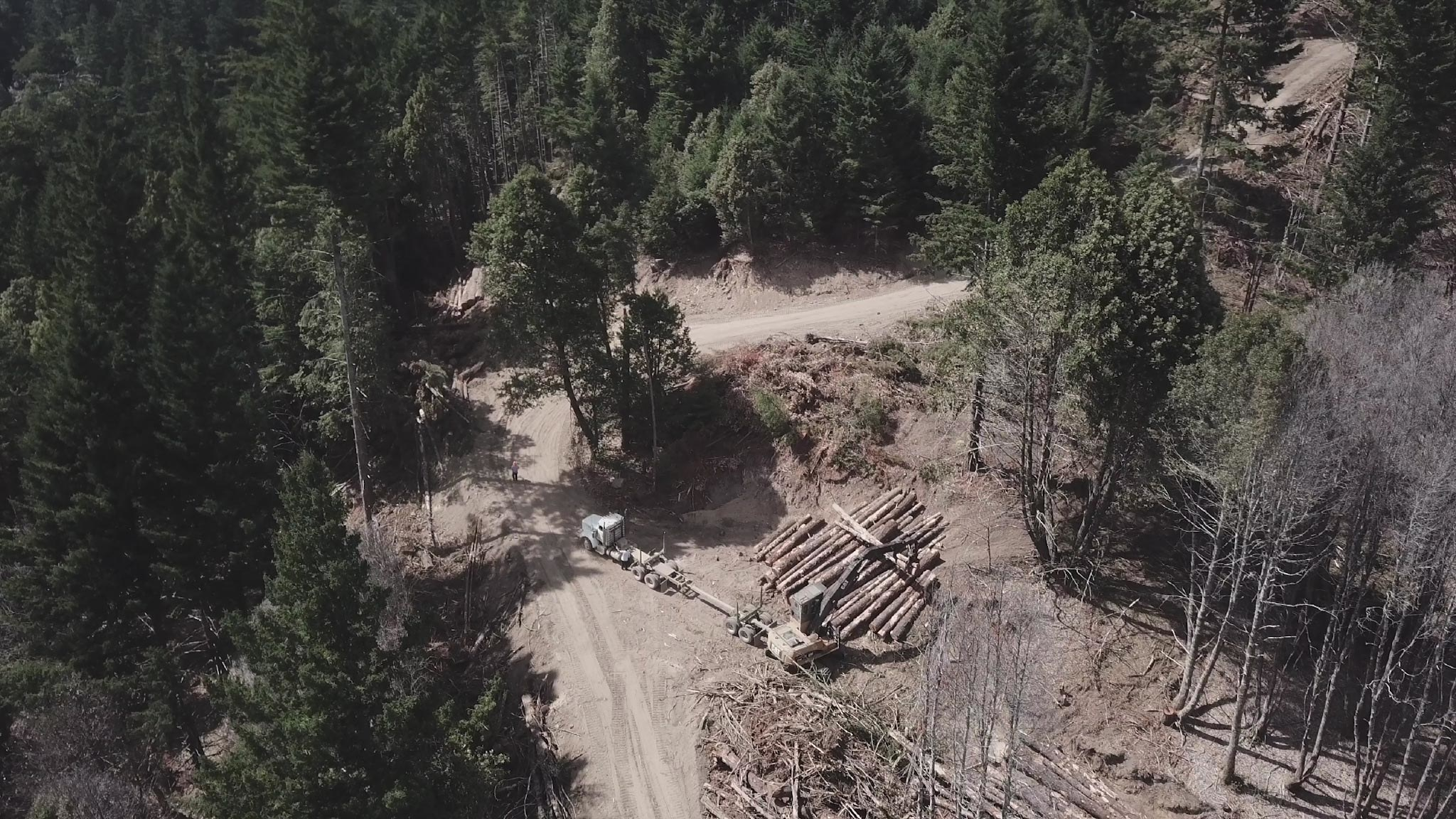 Logs are seen besides a road in an overhead shot