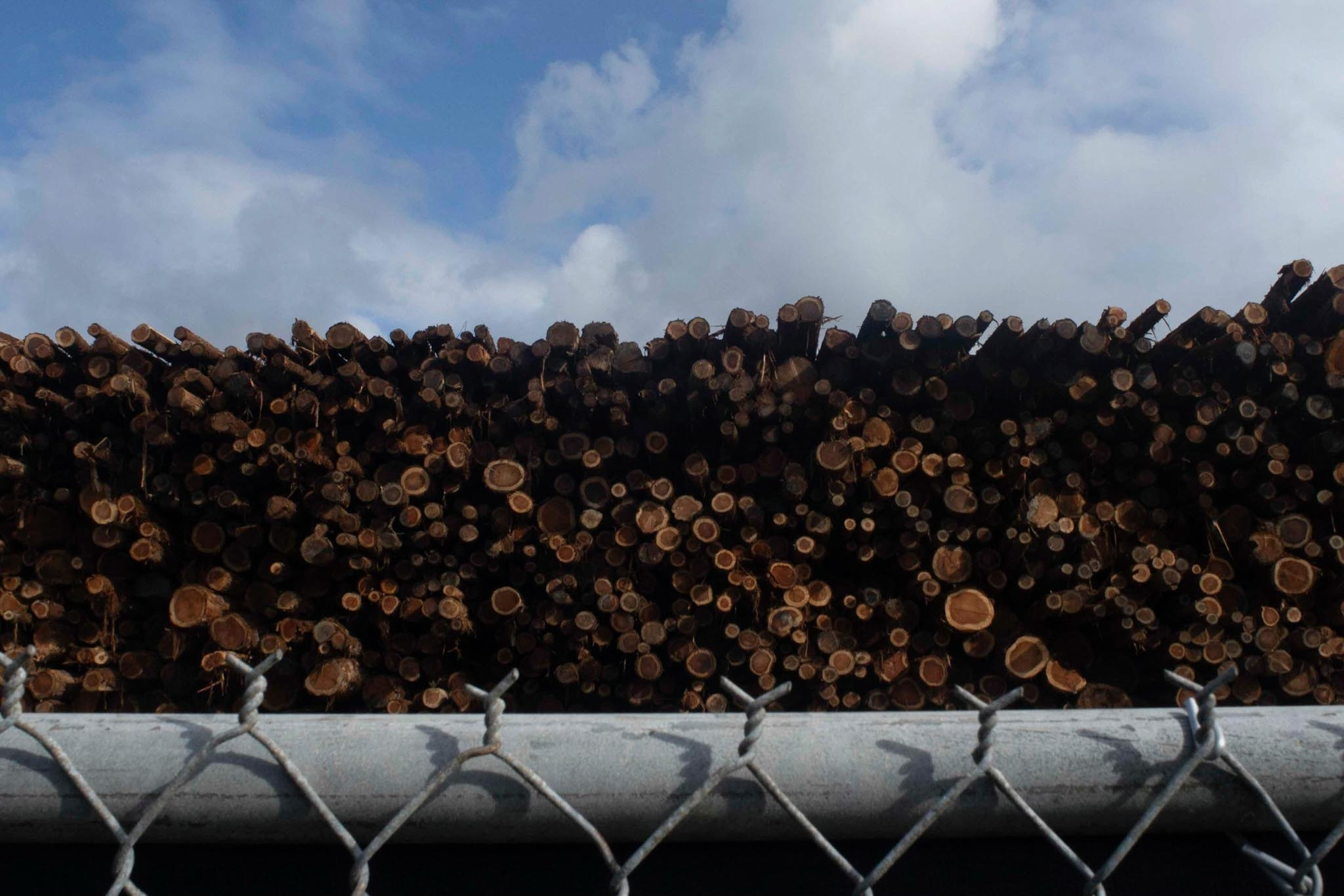 A huge pile of logs